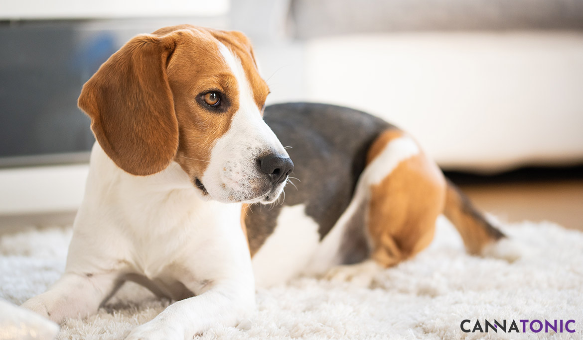 Top 3 Benefits of CBD For Dogs